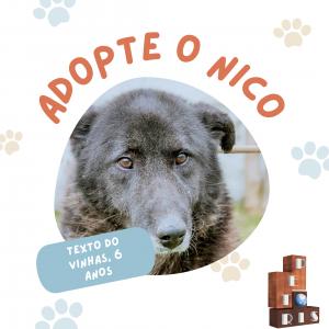 """""""O Nico é um cão fofo e bonito.  Eu atirava-lhe um pau e ele ia buscar. É assim que gosto de brincar com os cães."""" Rodrigo Vinhas, 6 anos."""